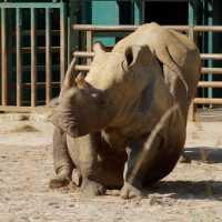 zoo%20SW%20Rhino%20B01_002_19-09-19