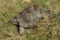 zoo%20Spur-thighed%20Tortoise%20B01_002_19-09-19