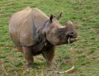 zoo%20one-horned%20rhinoceros%20A02_003_18-10-18