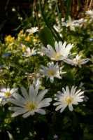 flora%20white%20flower%20A01_001_20-04-19
