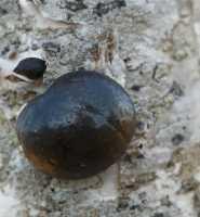 fungi%20Fungus%20A01_001%2003-05_18-05-20