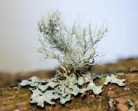 fungi%20Lichen%20B01_003_11-02-18
