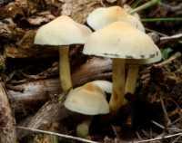 fungi%20Mushroom%20E01_001_14-10-17