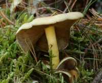 fungi%20mushroom%20C01_002_29-09-18