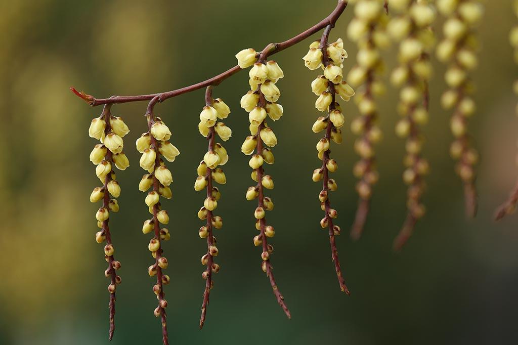 IMAGE: http://www.ware.myzen.co.uk/GalleryPics/Photos/Flora/Flora%20Blossom%20A_0001_05-03-11.jpg
