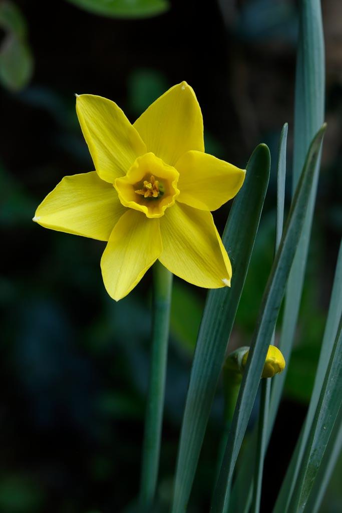 IMAGE: http://www.ware.myzen.co.uk/GalleryPics/Photos/Flora/Flora%20Garden%20Flowers_004_25-04-20.jpg