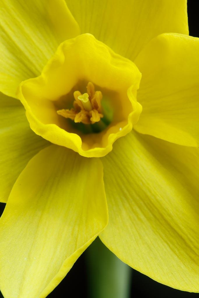 IMAGE: http://www.ware.myzen.co.uk/GalleryPics/Photos/Flora/Flora%20Garden%20Flowers_006_25-04-20.jpg