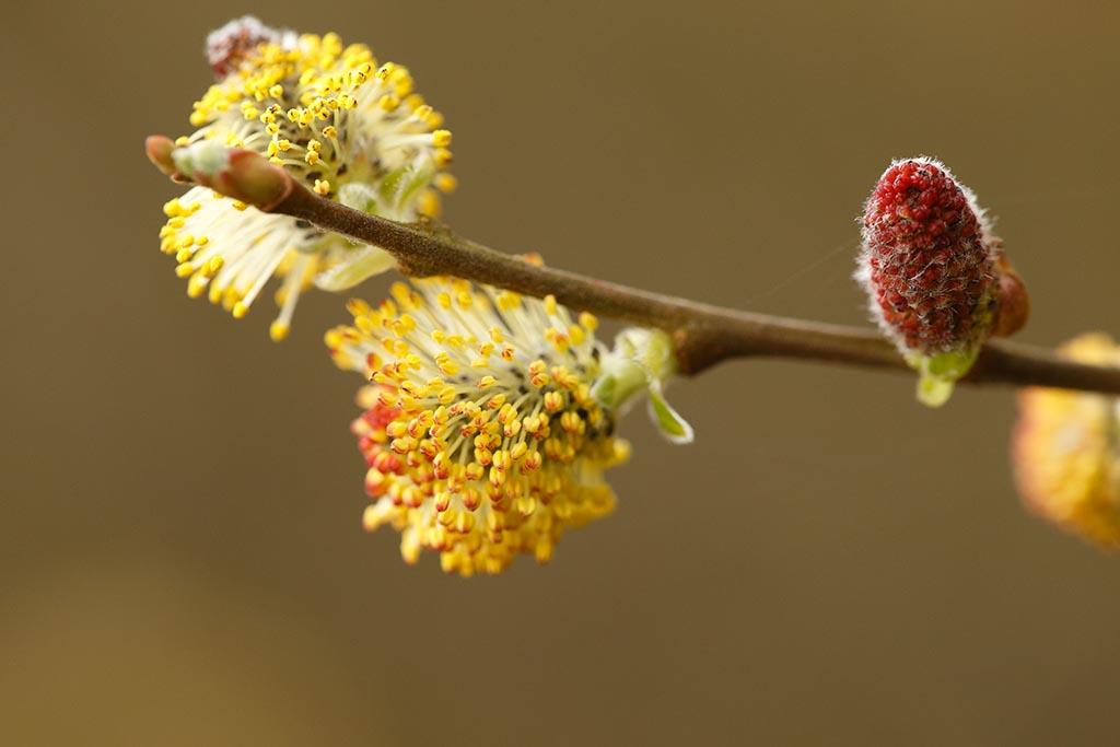 IMAGE: http://www.ware.myzen.co.uk/GalleryPics/Photos/Flora/flora%206D%20blossom%20A_002_31-03-14.jpg
