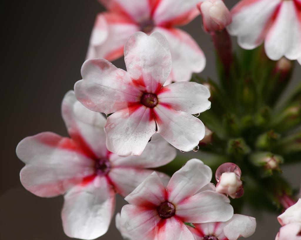 IMAGE: http://www.ware.myzen.co.uk/GalleryPics/Photos/Flora/flora%20Flower%20B_001_29-05-17.jpg