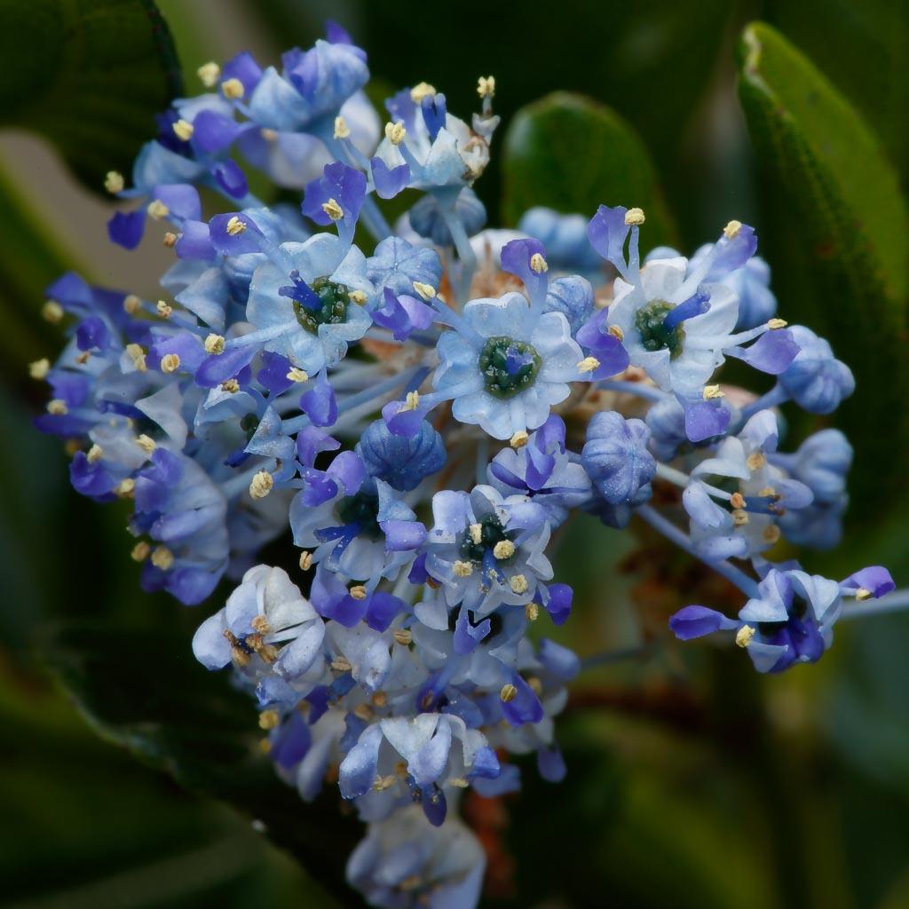 IMAGE: http://www.ware.myzen.co.uk/GalleryPics/Photos/Flora/flora%20Garden%20Flowers_004_06-04-20.jpg