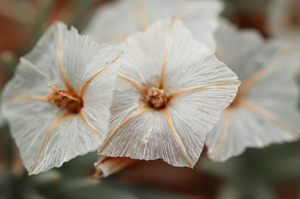 IMAGE: http://www.ware.myzen.co.uk/GalleryPics/Photos/Flora/flora%20alpin%20C_0002_13-02-10.jpg