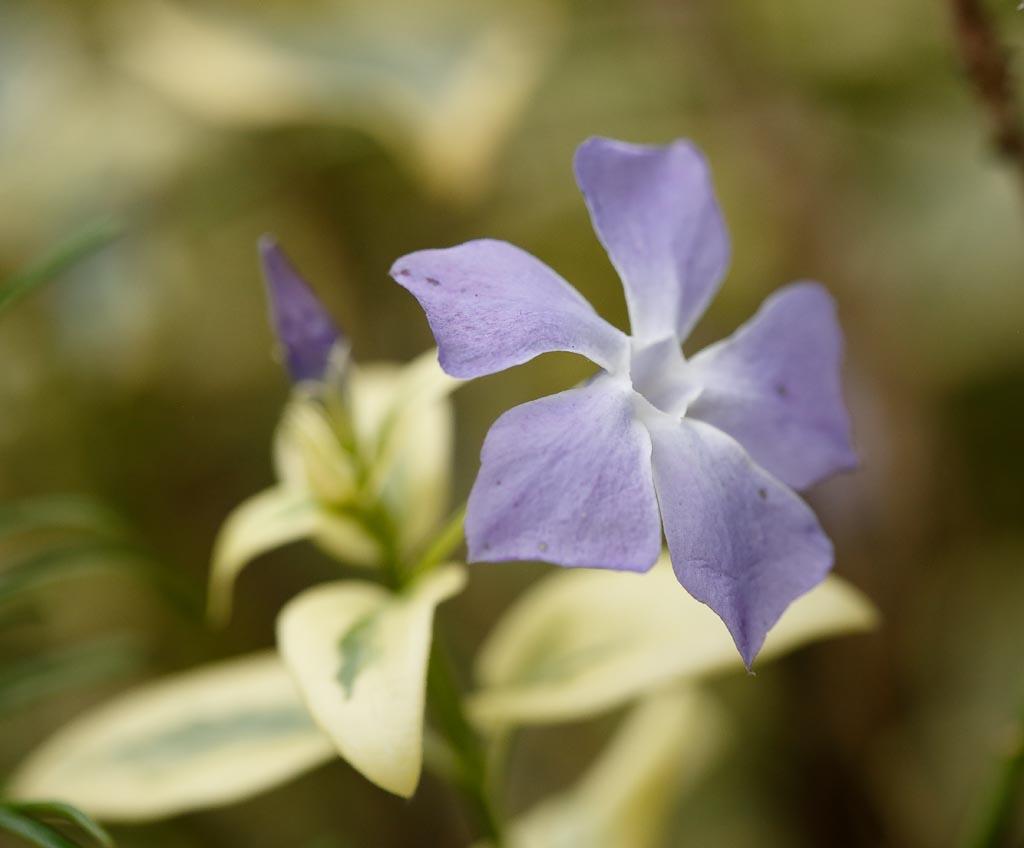 IMAGE: http://www.ware.myzen.co.uk/GalleryPics/Photos/Flora/flora%20flower%20A01_001_05-01-19.jpg