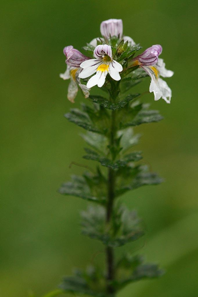 IMAGE: http://www.ware.myzen.co.uk/GalleryPics/Photos/Flora/flora%20flower%20A1B_0001_02-10-10.jpg