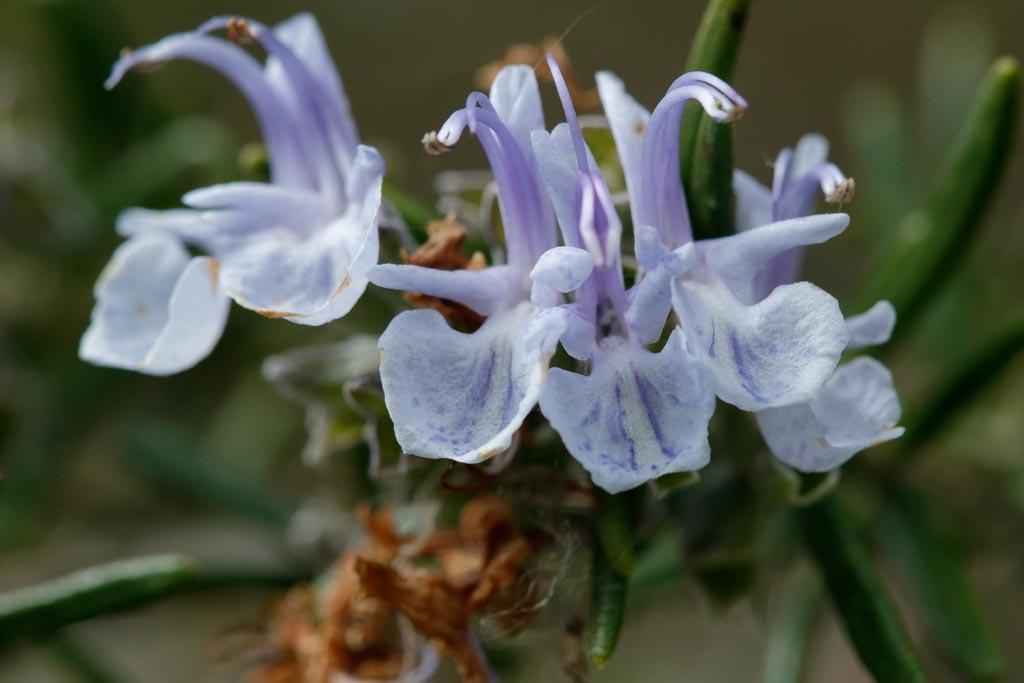 IMAGE: http://www.ware.myzen.co.uk/GalleryPics/Photos/Flora/flora%20selection_004_06-05-19.jpg