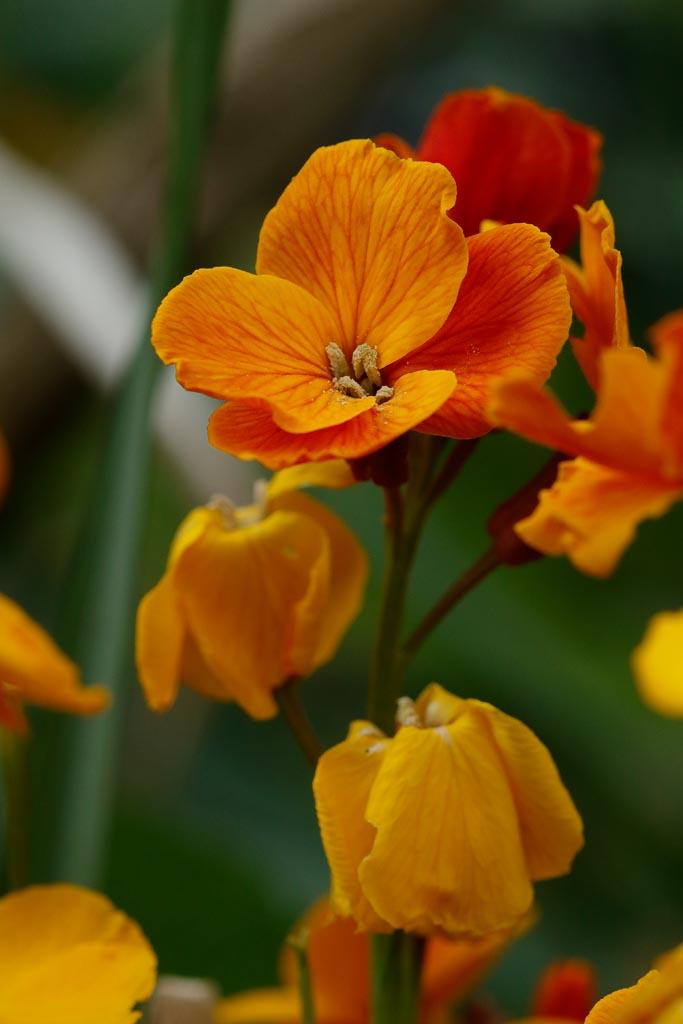 IMAGE: http://www.ware.myzen.co.uk/GalleryPics/Photos/Flora/flora%20selection_009_06-05-19.jpg