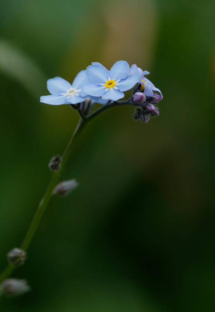 IMAGE: http://www.ware.myzen.co.uk/GalleryPics/Photos/Flora/flora%20selection_010_06-05-19.jpg
