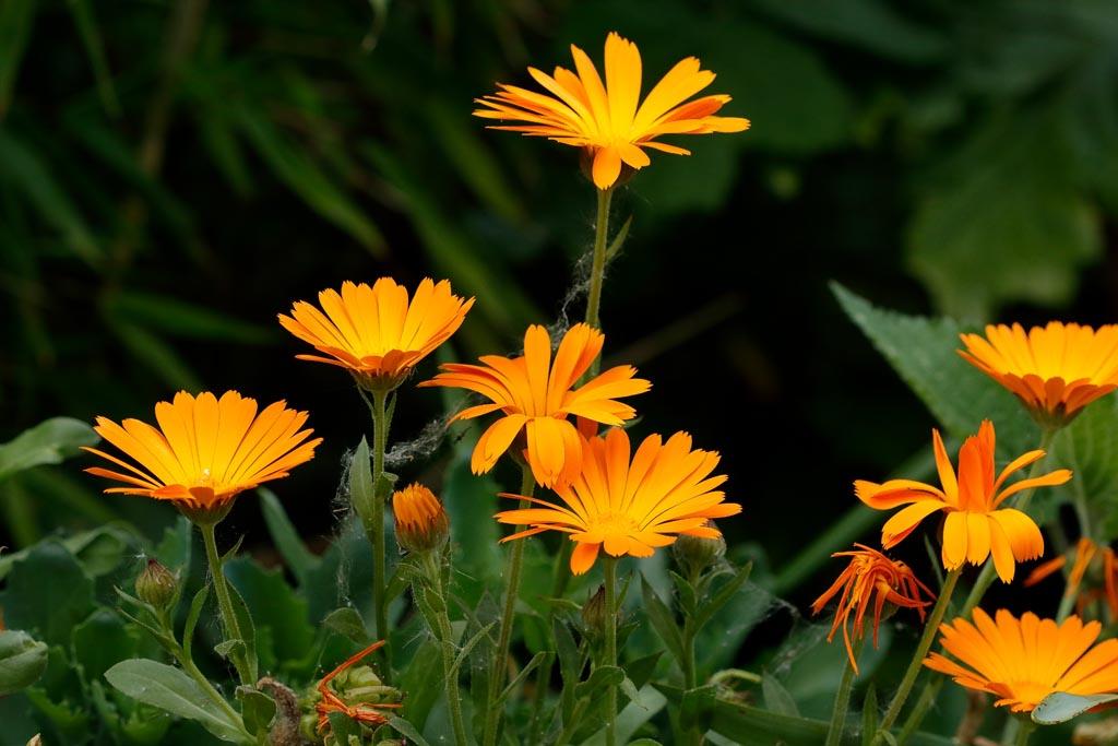 IMAGE: http://www.ware.myzen.co.uk/GalleryPics/Photos/Flora/flora%20selection_014_06-05-19.jpg