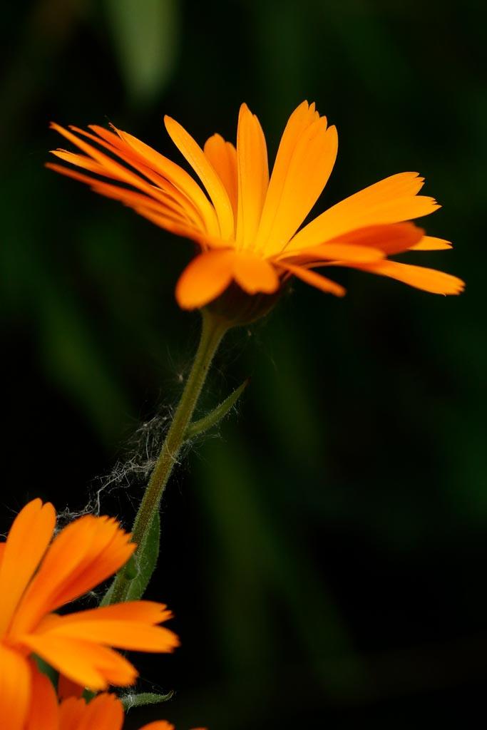 IMAGE: http://www.ware.myzen.co.uk/GalleryPics/Photos/Flora/flora%20selection_015_06-05-19.jpg
