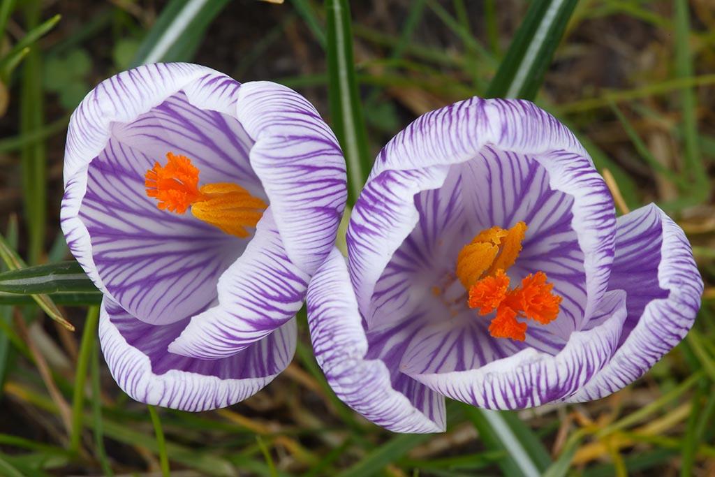 IMAGE: http://www.ware.myzen.co.uk/GalleryPics/Photos/Flora/flora%20sping%20flowers_009_22-02-14.jpg