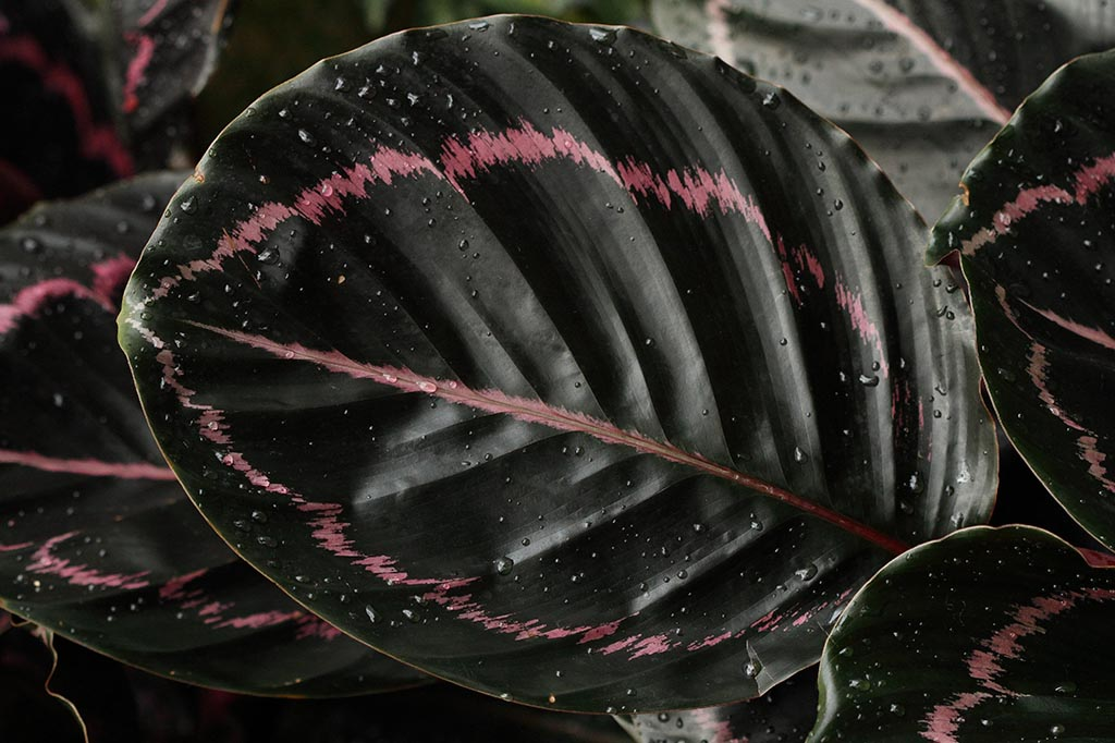 IMAGE: http://www.ware.myzen.co.uk/GalleryPics/Photos/Flora/flora%20tropical%20H_0002_13-02-10.jpg