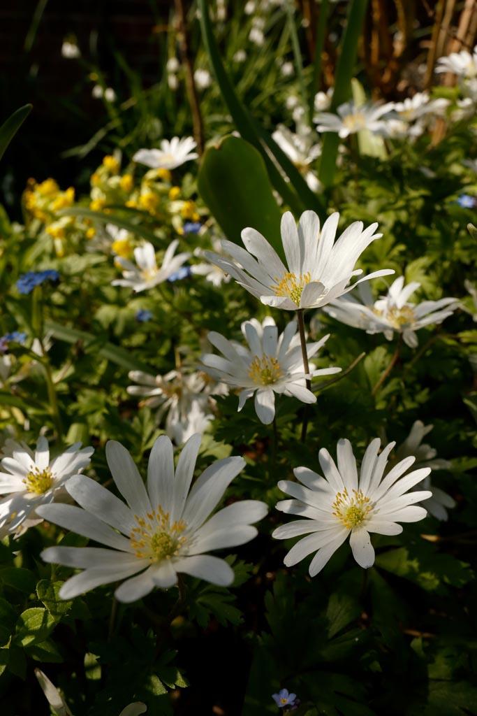 IMAGE: http://www.ware.myzen.co.uk/GalleryPics/Photos/Flora/flora%20white%20flower%20A01_001_20-04-19.jpg