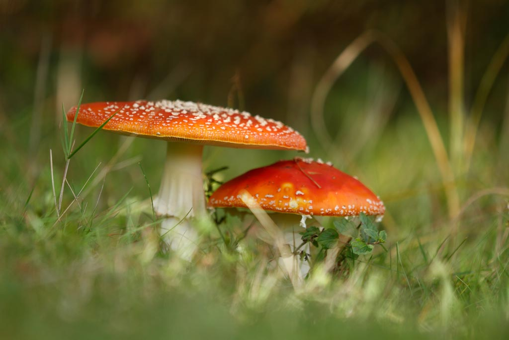IMAGE: http://www.ware.myzen.co.uk/GalleryPics/Photos/Fungi/fungi%20Mushroom%20C01_002_22-09-17.jpg