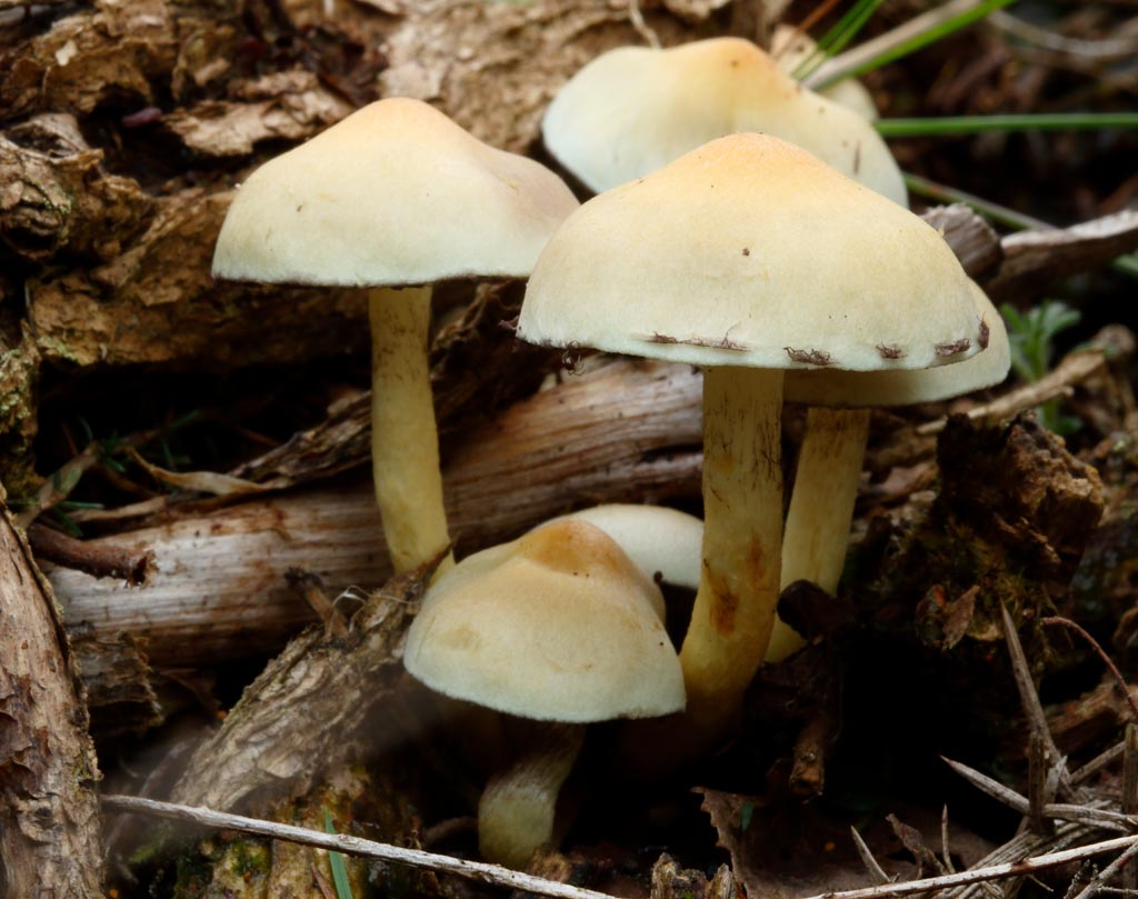 IMAGE: http://www.ware.myzen.co.uk/GalleryPics/Photos/Fungi/fungi%20Mushroom%20E01_001_14-10-17.jpg