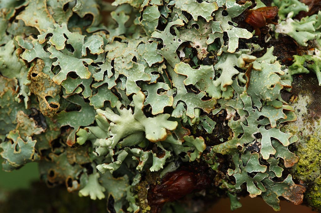IMAGE: http://www.ware.myzen.co.uk/GalleryPics/Photos/Fungi/fungi%20lichen_003_05-11-11.jpg