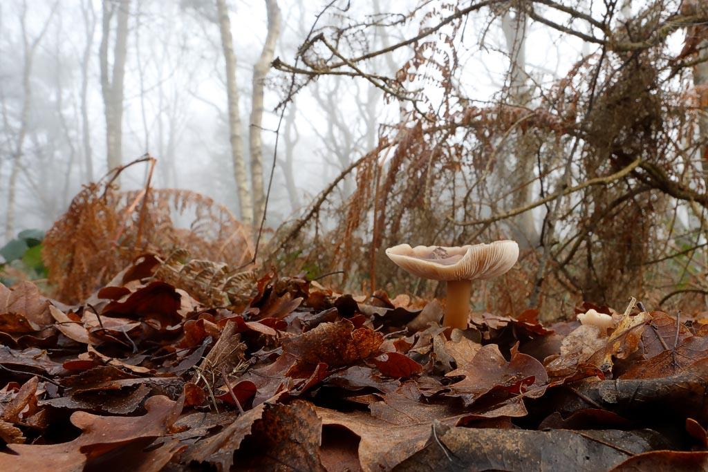 IMAGE: http://www.ware.myzen.co.uk/GalleryPics/Photos/Fungi/fungi%20mushroom%20A01_001_27-12-18.jpg
