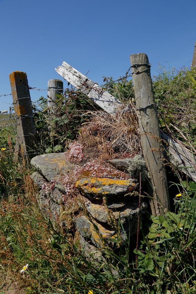 IMAGE: http://www.ware.myzen.co.uk/GalleryPics/Photos/General/land%20Aberffraw%20Coast%20A02_003_07-06-18.jpg